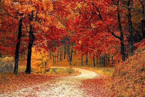 What's In Season In October?
