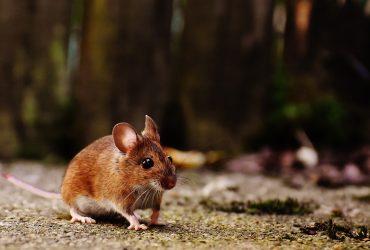 Top 6 Ways To Get Rid Of Mice In Office Buildings
