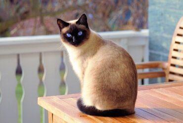 6 Tips to Improve Your Cat's Diet